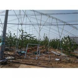 日光温室建设-日光温室建设安装-日光温室建设厂家